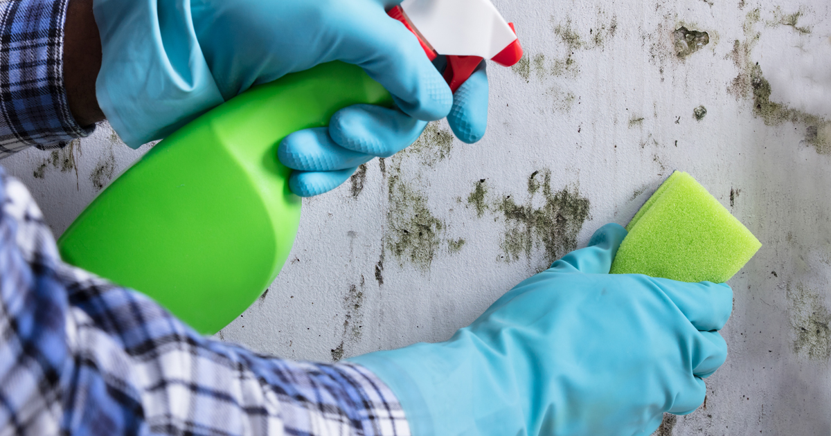 Mold and cleaning supplies